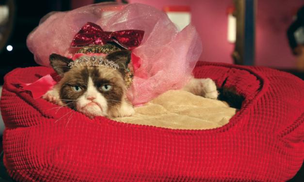 Grumpy Cat jetzt neu im Madame Tussauds Wien